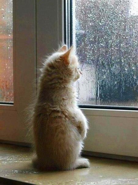 Как сделать так чтобы дождь не шел